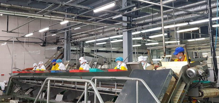 Сотрудники обособленного подразделения ПАО «ПБТФ» получили опыт интеграции в сфере рыбообработки